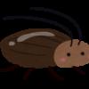 ゴキブリ対策の退治方法とは!最強の対策はアロマとハッカ油?