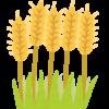 もち麦は効果なし?口コミより便秘とコレステロール改善できる?