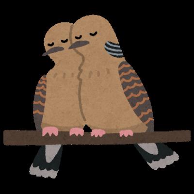 bird_kijibato_tsugai