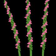 flower_nejibana