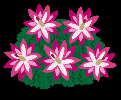 flower_syakoba_saboten