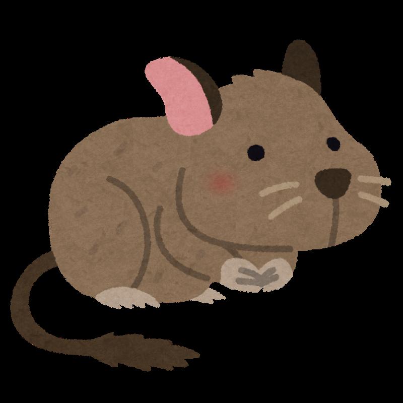 animal_degu