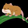 カヤネズミをペットに!飼育の巣や餌はどうするの?